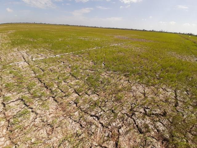 Ảnh hưởng của nước nhiễm mặn và phương pháp xử lý