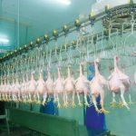 Lập kế hoạch bảo vệ môi trường cho cơ sở giết mổ gia súc gia cầm