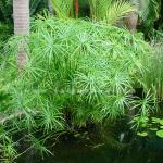 Phương pháp xử lý nước thải sinh hoạt bằng thủy trúc